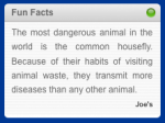 Fun Facts - Widget